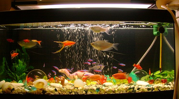 How to clean your aquarium like a pro cleaning for How to clean an old fish tank