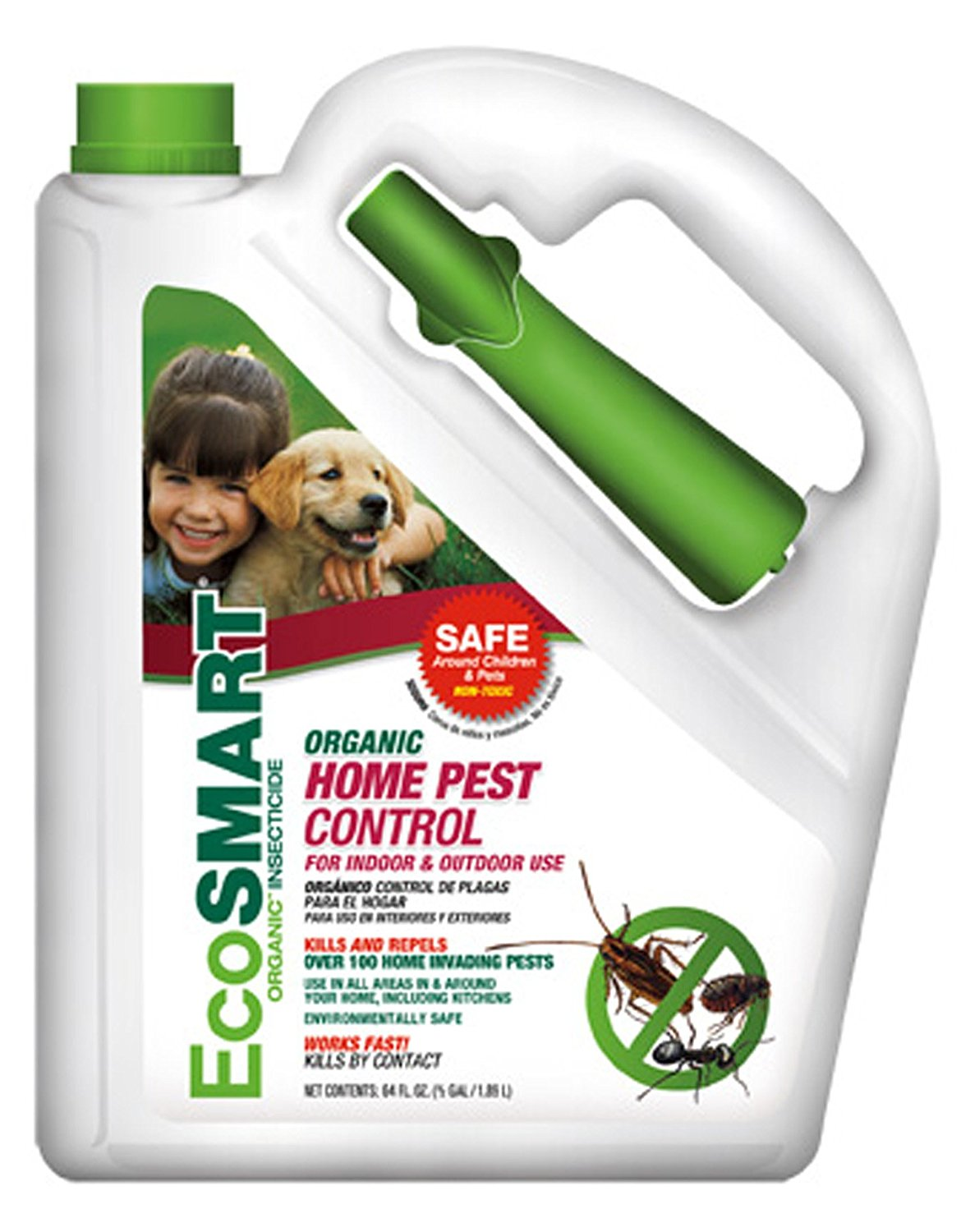 How To Get Rid Of Carpet Beetle And Their Larvae