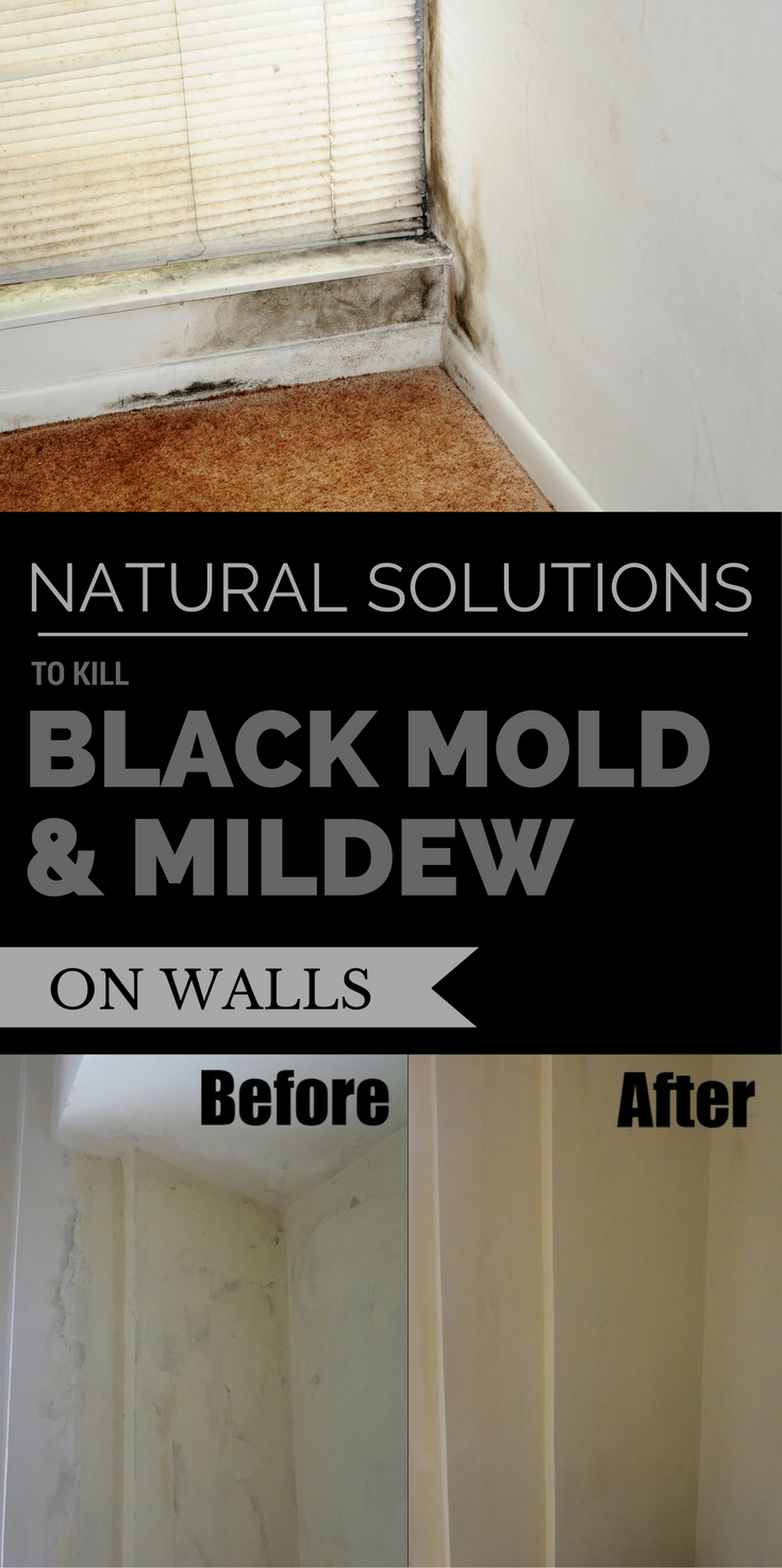 Natural Solutions To Kill Black Mold Amp Mildew On Walls