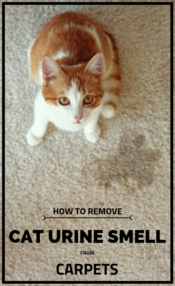 How To Remove Cat Urine Smell From Carpets Cleaning